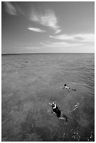 Snorkelers over a coral reef. Biscayne National Park, Florida, USA. (black and white)