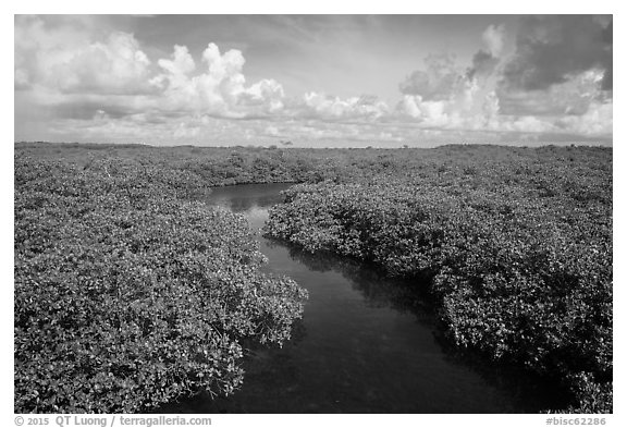 Channel in mangrove forest. Biscayne National Park (black and white)