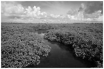Channel in mangrove forest. Biscayne National Park ( black and white)