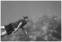 Free diver swimming amidst fish and coral. Dry Tortugas National Park, Florida, USA. (black and white)