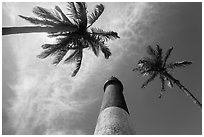 Looking up palm trees and Loggerhead Lighthouse. Dry Tortugas National Park, Florida, USA. (black and white)