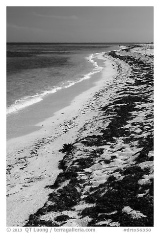 Beached seagrass and shoreline, Loggerhead Key. Dry Tortugas National Park (black and white)