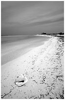 Conch shell and sandy beach on Bush Key. Dry Tortugas National Park, Florida, USA. (black and white)