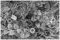 Ground view with flowers and fallen leaves, Garden Key. Dry Tortugas National Park, Florida, USA. (black and white)