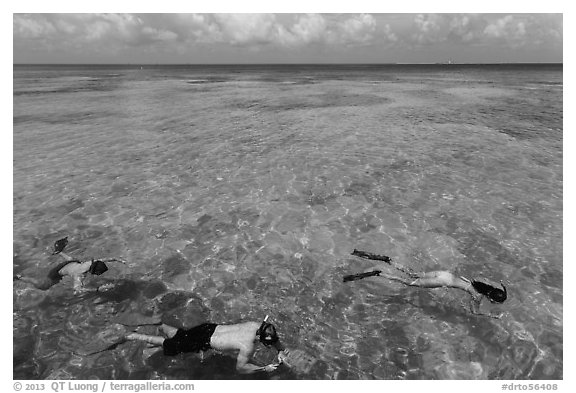 Snorkelers and reef, Garden Key. Dry Tortugas National Park (black and white)