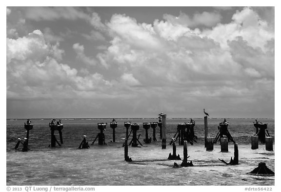 South coaling dock ruins and seabirds, Garden Key. Dry Tortugas National Park (black and white)