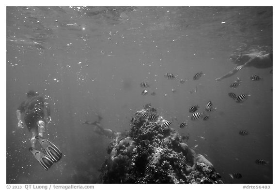Snorklers, fish, and coral. Dry Tortugas National Park (black and white)