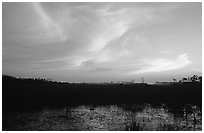 Dawn on marsh and sawgrass prairie. Everglades National Park, Florida, USA. (black and white)