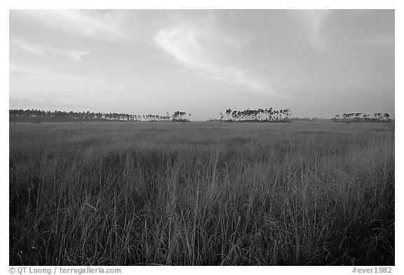 Sawgrass prairie environment with distant pinelands near Mahogany Hammock. Everglades National Park (black and white)