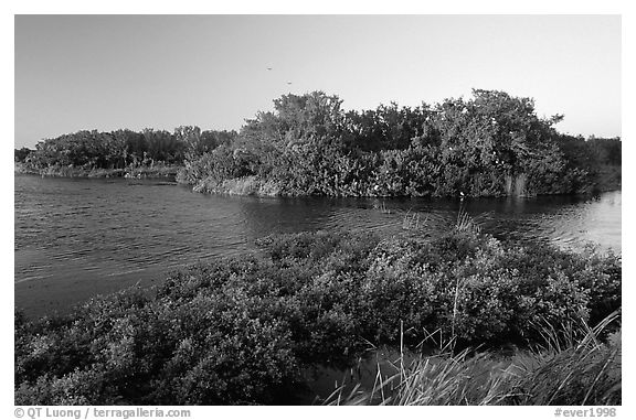 Eco pond with birds in distant trees, evening. Everglades National Park (black and white)