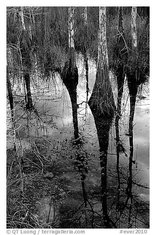 Pond Cypress reflections near Pa-hay-okee. Everglades National Park (black and white)
