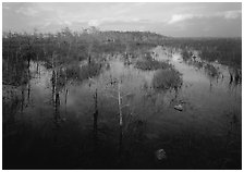 Cypress and sawgrass near Pa-hay-okee, evening. Everglades  National Park ( black and white)