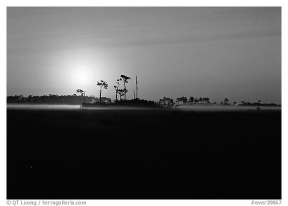 Sunrise with pine trees and ground fog over meadow. Everglades  National Park (black and white)