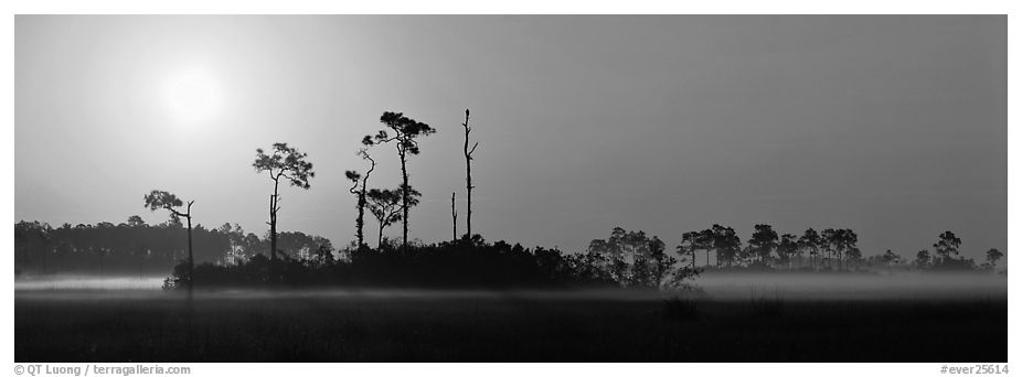 Sunrise landscape with mist on the ground. Everglades National Park (black and white)