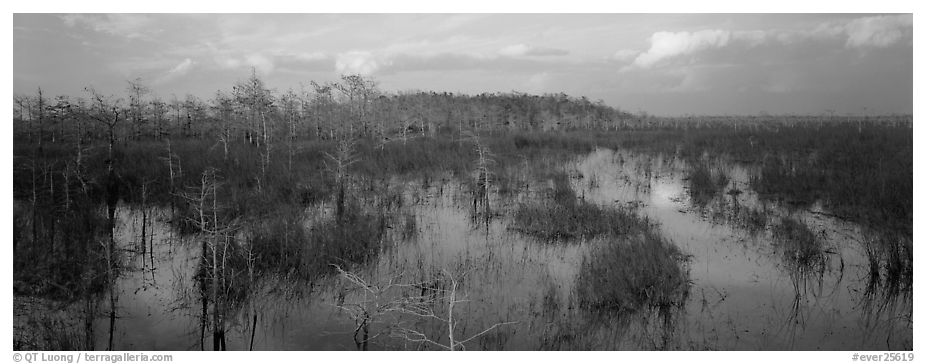 Swamp landscape in the evening. Everglades National Park (black and white)