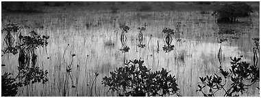 Mangroves and reflections. Everglades National Park (Panoramic black and white)
