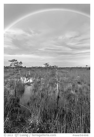 Rainbow over dwarf cypress grove. Everglades National Park (black and white)