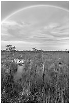 Rainbow over dwarf cypress grove. Everglades National Park, Florida, USA. (black and white)