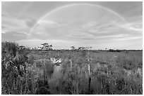 Double rainbow over dwarf cypress forest. Everglades National Park, Florida, USA. (black and white)
