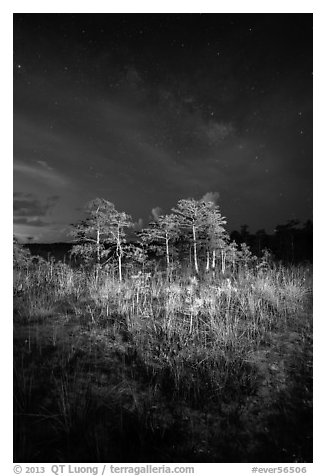 Dwarf cypress and stars at night, Pa-hay-okee. Everglades National Park (black and white)