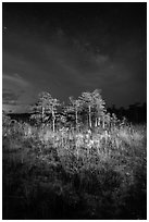 Dwarf cypress and stars at night, Pa-hay-okee. Everglades National Park, Florida, USA. (black and white)
