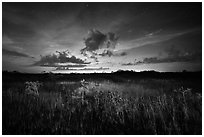 Sawgrass and dwarf cypress at night. Everglades National Park, Florida, USA. (black and white)