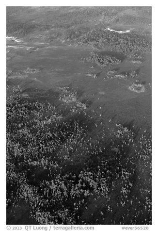 Aerial view of cypress and pines. Everglades National Park (black and white)