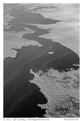 Aerial view of dense mangrove coastline and inlets. Everglades National Park (black and white)