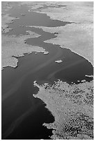 Aerial view of dense mangrove coastline and inlets. Everglades National Park ( black and white)