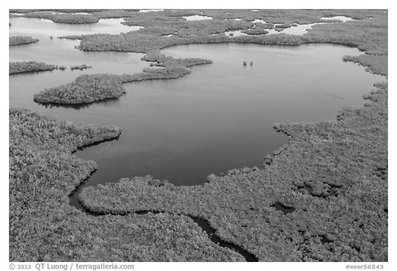 Aerial view of mangrove-fringed lake. Everglades National Park (black and white)