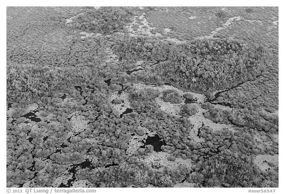 Aerial view of marsh with red color from mangroves. Everglades National Park (black and white)