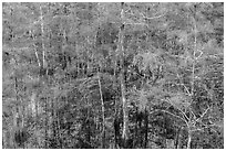 Cypress in summer, Pa-hay-okee. Everglades National Park ( black and white)