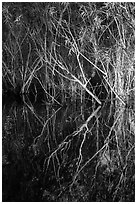 Branches and reflections, Shark Valley. Everglades National Park ( black and white)