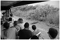 Tourists look at alligator from tram, Shark Valley. Everglades National Park ( black and white)