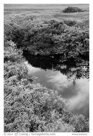 Pond from above, Shark Valley. Everglades National Park (black and white)
