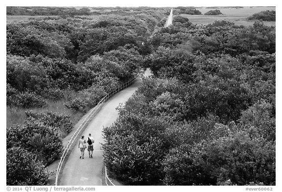 Trail and tram road, Shark Valley. Everglades National Park (black and white)