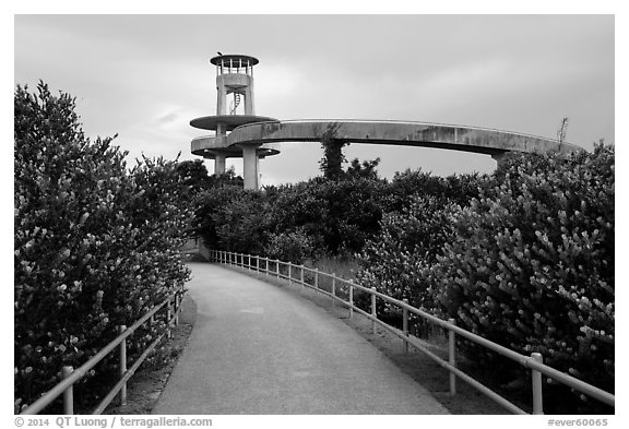 Trail and observation tower, Shark Valley. Everglades National Park (black and white)