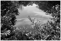 Pond surrounded by vegetation, Shark Valley. Everglades National Park ( black and white)
