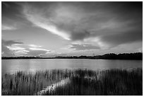 Nine-Mile Pond at sunrise. Everglades National Park ( black and white)