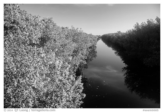Buttonwood Canal. Everglades National Park (black and white)