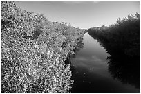 Buttonwood Canal. Everglades National Park ( black and white)