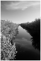 Canal lined up with mangroves. Everglades National Park ( black and white)