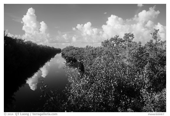 Buttonwood Canal and clouds. Everglades National Park (black and white)