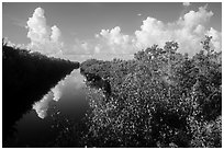 Buttonwood Canal and clouds. Everglades National Park ( black and white)