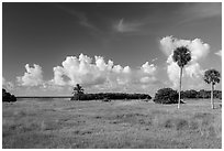 Coastal prairie, Flamingo. Everglades National Park ( black and white)