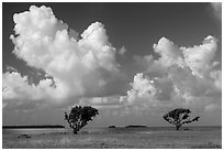 Trees, Florida Bay, and clouds. Everglades National Park ( black and white)