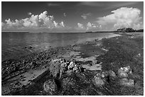 Florida Bay shores. Everglades National Park ( black and white)
