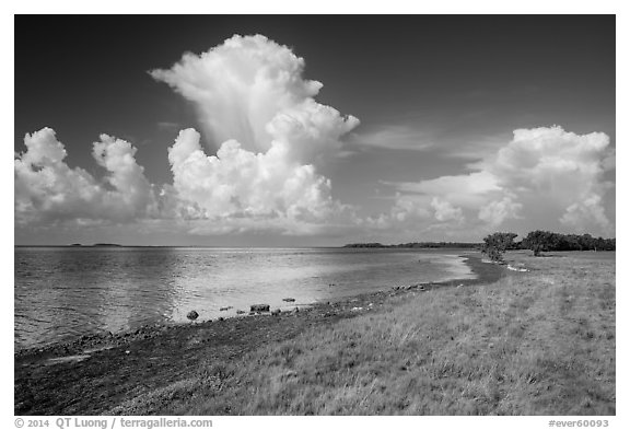 Coastal prairie, Florida Bay, and clouds. Everglades National Park (black and white)