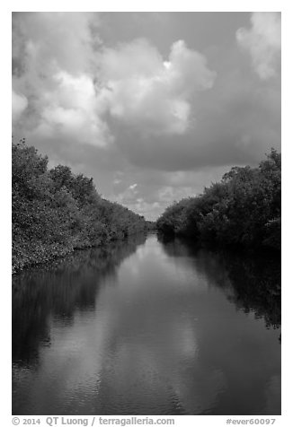 Buttonwood Canal bordered by tropical vegetation. Everglades National Park (black and white)