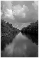 Buttonwood Canal bordered by tropical vegetation. Everglades National Park ( black and white)